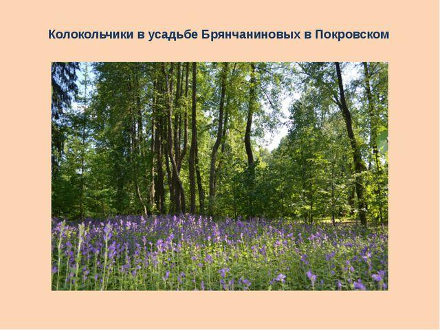 Колокольчики в усадьбе Брянчаниновых в Покровском
