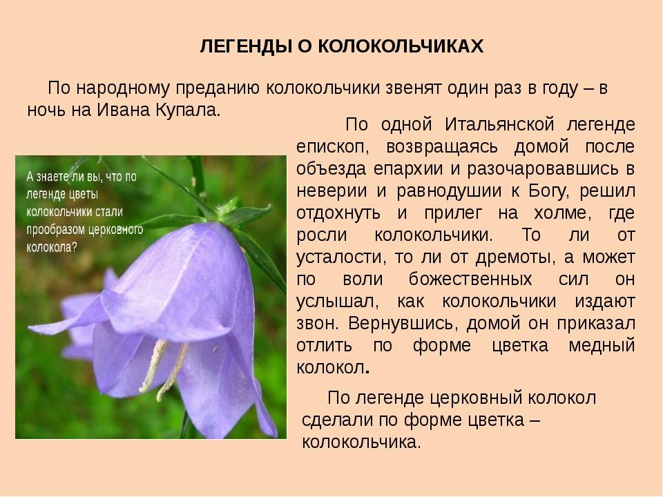 По народному преданию колокольчики звенят один раз в году – в ночь на Ивана...
