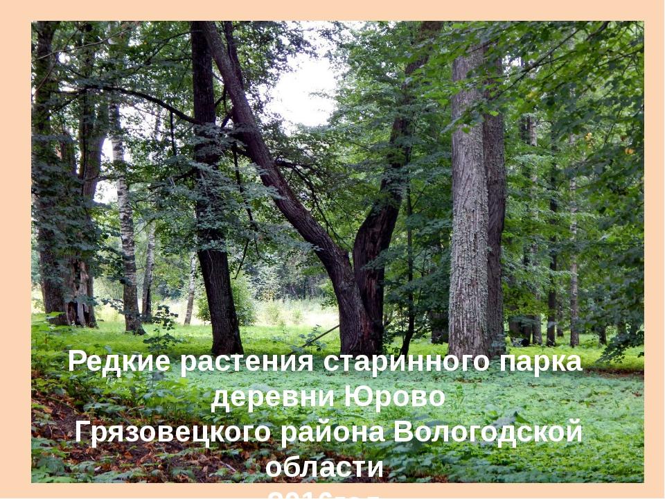 Редкие растения старинного парка деревни Юрово Грязовецкого района Вологодско...