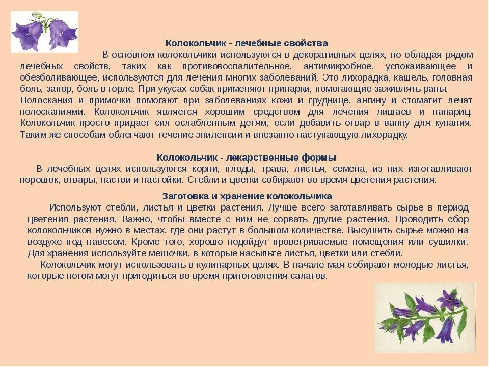 Колокольчик - лечебные свойства В основном колокольчики используются в декора...
