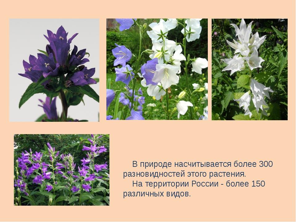 В природе насчитывается более 300 разновидностей этого растения. На территор...