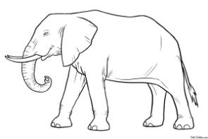 raskraska-slon.jpg