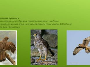 Обыкновенная пустельга́ —птицаиз отрядасоколообразныхсемействасоколиных