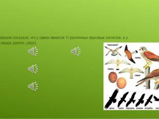 Исследования показали, что у самок имеется 11 различных звуковых сигналов, а