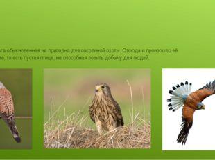 Пустельга обыкновенная не пригодна для соколиной охоты. Отсюда и произошло е