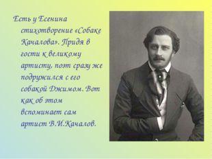 Есть у Есенина стихотворение «Собаке Качалова». Придя в гости к великому арти