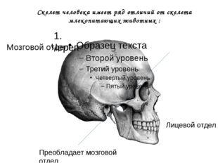 Скелет человека имеет ряд отличий от скелета млекопитающих животных : Мозгово