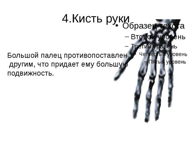 4.Кисть руки Большой палец противопоставлен другим, что придает ему большую п...
