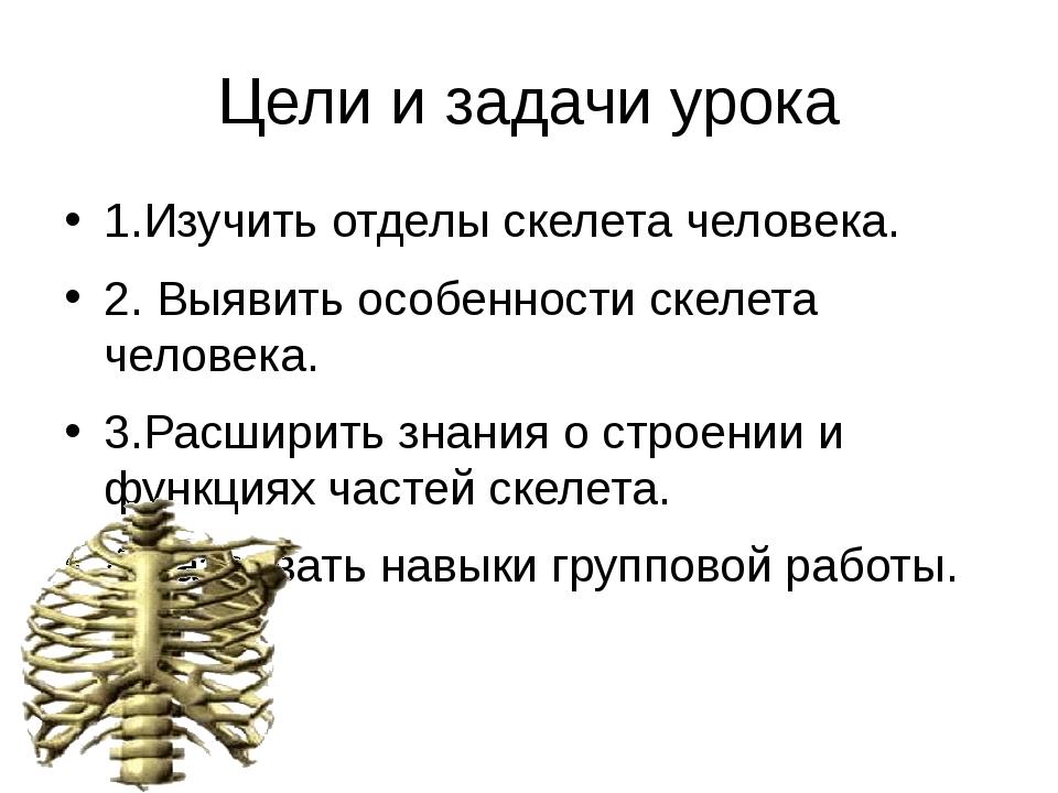 Цели и задачи урока 1.Изучить отделы скелета человека. 2. Выявить особенности...
