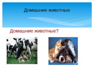 Домашние животные? Домашние животные