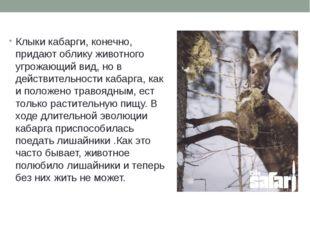 Клыки кабарги, конечно, придают облику животного угрожающий вид, но в действи