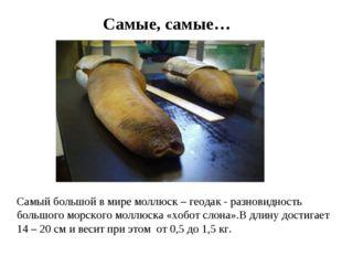 Самые, самые… Самый большой в мире моллюск – геодак - разновидность большого