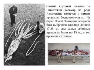 Самый крупный кальмар – Гигантский кальмар из рода Архитевтис является и самы
