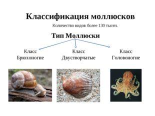 Классификация моллюсков Количество видов более 130 тысяч. Тип Моллюски Класс