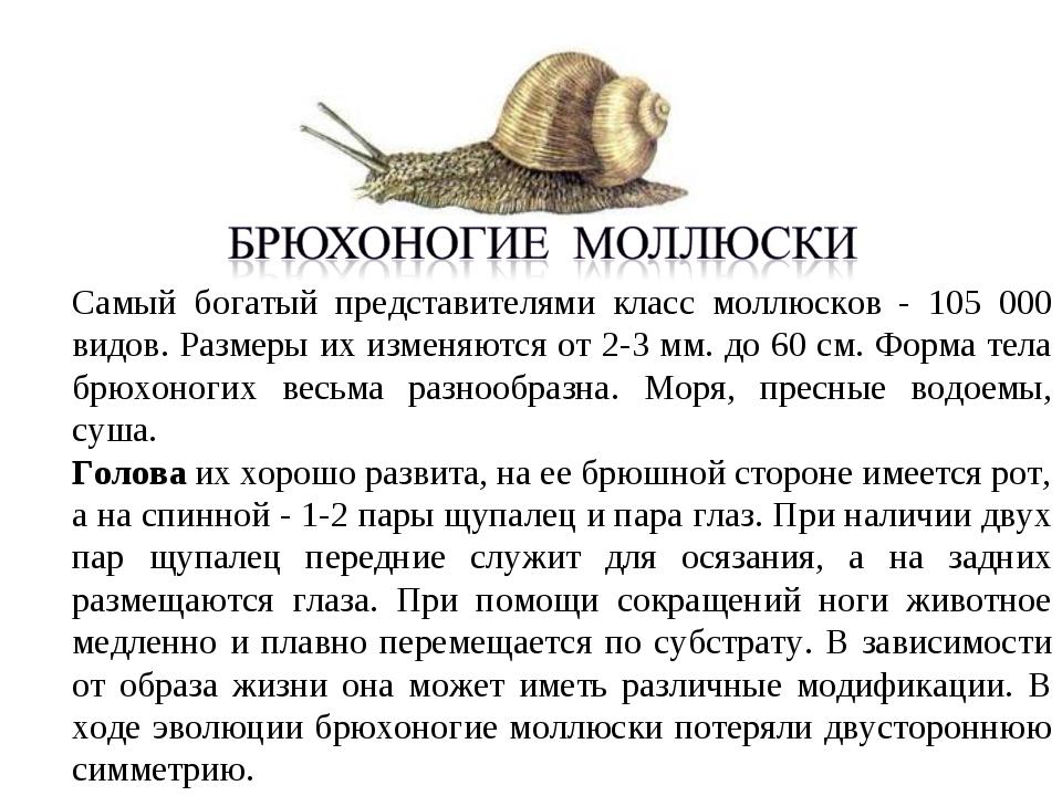 Самый богатый представителями класс моллюсков - 105 000 видов. Размеры их изм...
