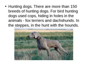 Hunting dogs. There are more than 150 breeds of hunting dogs. For bird huntin