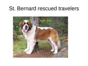 St. Bernard rescued travelers