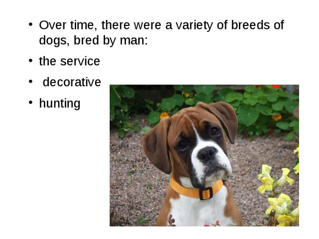 Over time, there were a variety of breeds of dogs, bred by man: the service d...