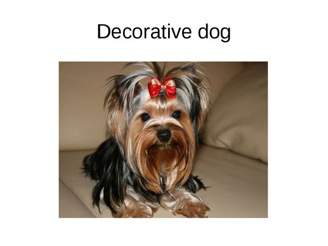 Decorative dog