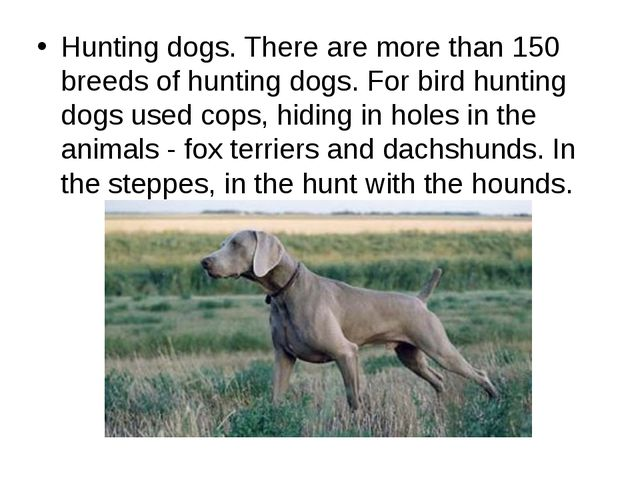 Hunting dogs. There are more than 150 breeds of hunting dogs. For bird huntin...
