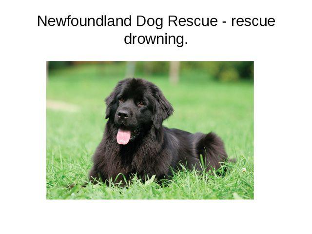 Newfoundland Dog Rescue - rescue drowning.