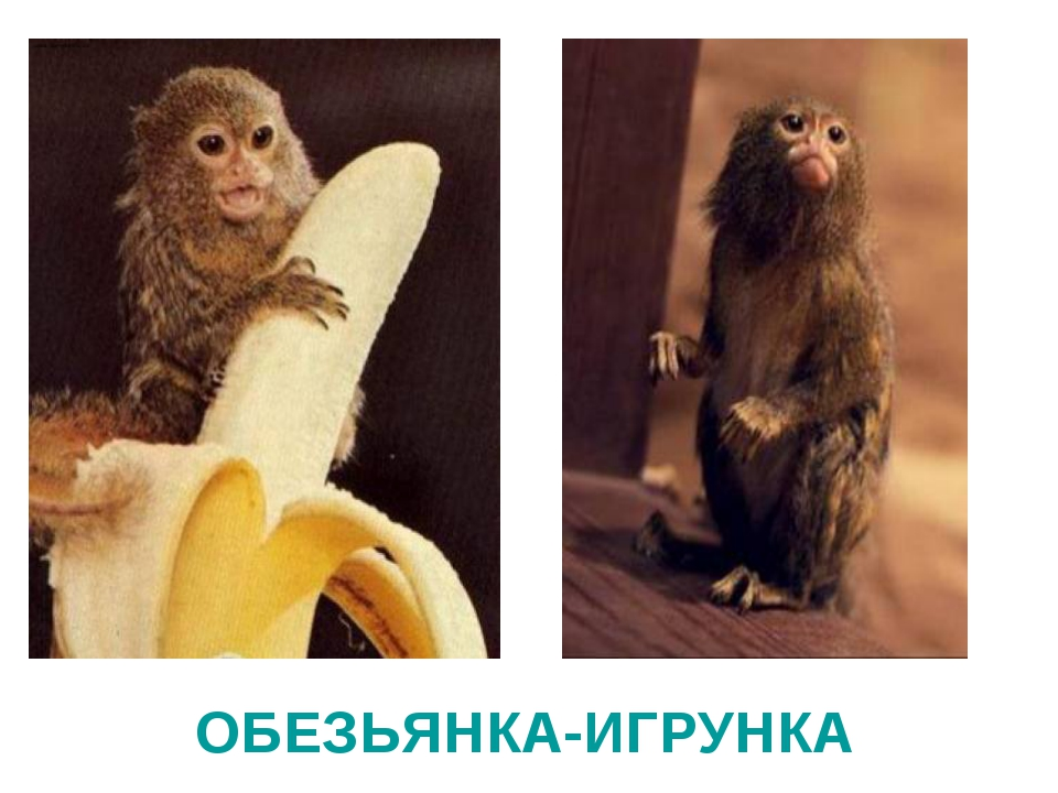 ОБЕЗЬЯНКА-ИГРУНКА