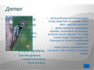 Чем кормить птиц? Собирайте для корма птицам семена сорняков: конского щавеля