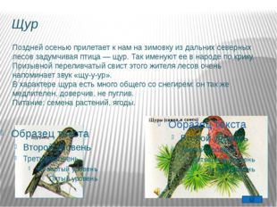 Экологи Жизнь с птицами Жизнь без птиц