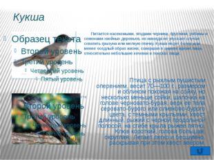 Редакторы: Весь собранный материал (информацию о птицах, фотографии, рисунки)
