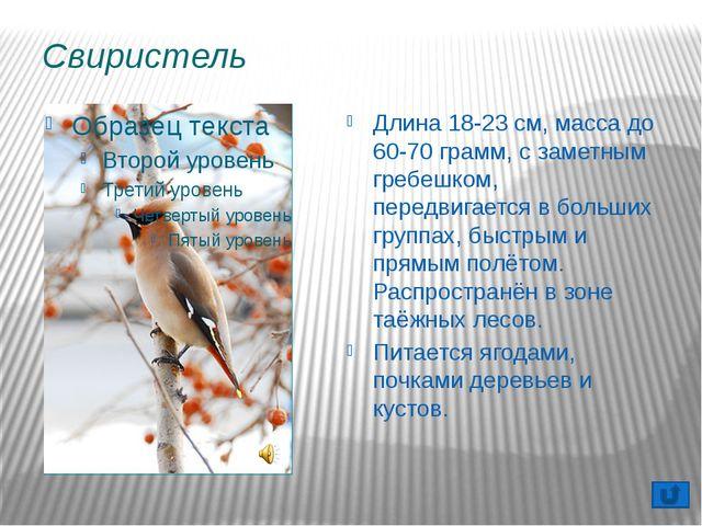 Кукша Питается насекомыми, ягодами черники, брусники, рябины и семенами хвойн...
