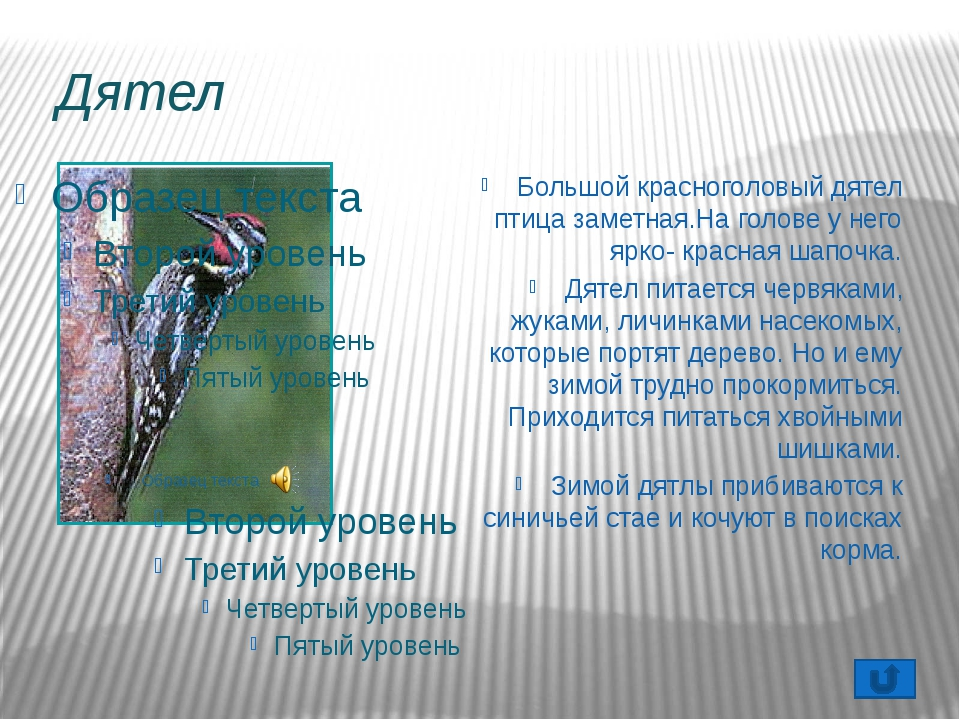 Чем кормить птиц? Собирайте для корма птицам семена сорняков: конского щавеля...