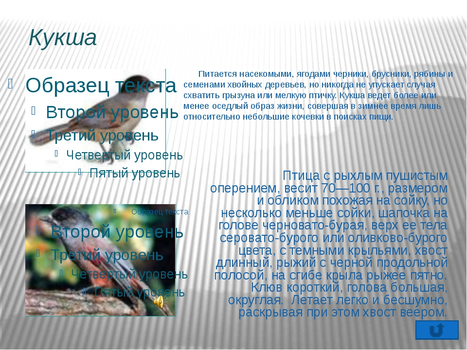 Редакторы: Весь собранный материал (информацию о птицах, фотографии, рисунки)...