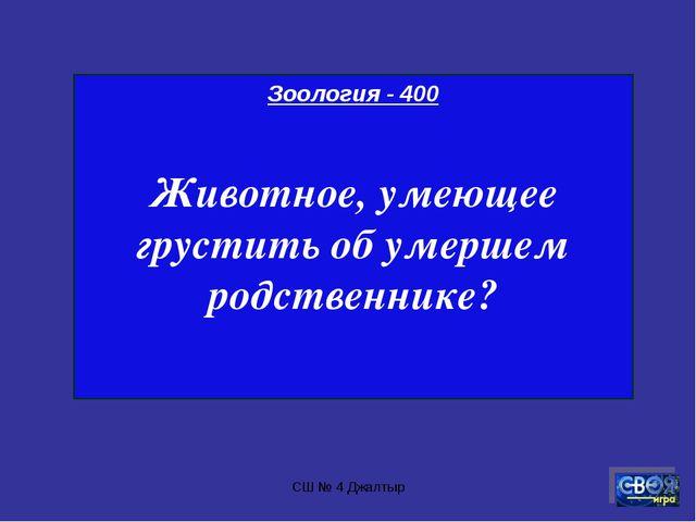 СШ № 4 Джалтыр Зоология - 400 Животное, умеющее грустить об умершем родственн...