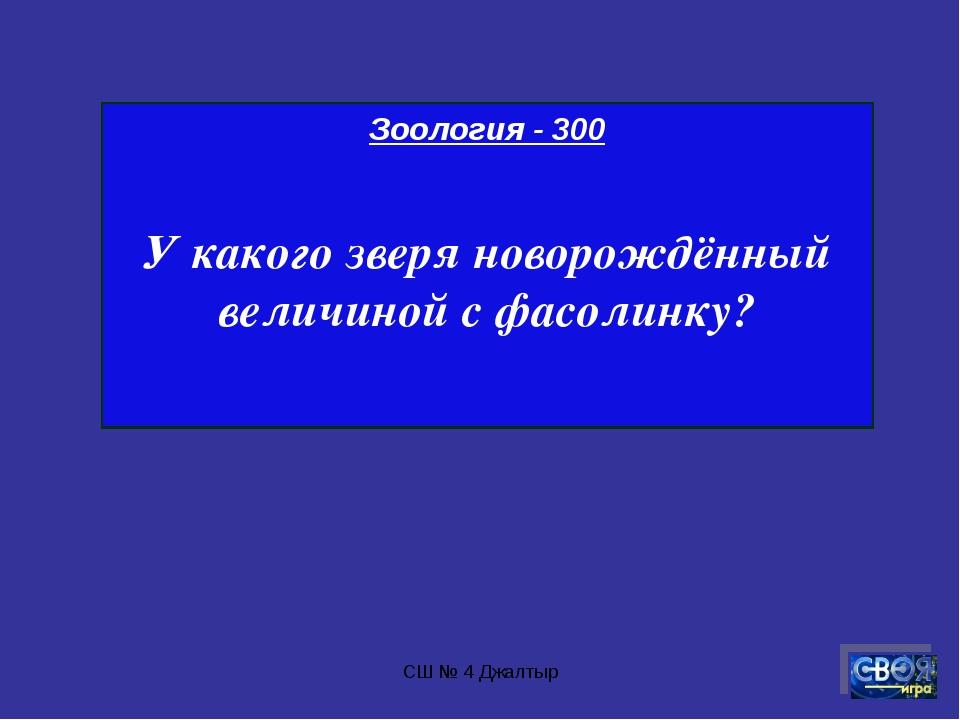 СШ № 4 Джалтыр Зоология - 300 У какого зверя новорождённый величиной с фасоли...