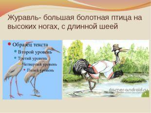Журавль- большая болотная птица на высоких ногах, с длинной шеей