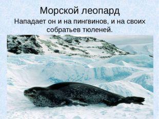 Морской леопард Нападает он и на пингвинов, и на своих собратьев тюленей.