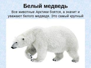 Белый медведь Все животные Арктики боятся, а значит и уважают белого медведя.