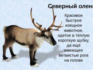 Северный олень Красивое быстрое изящное животное, одетое в тёплую короткую шу