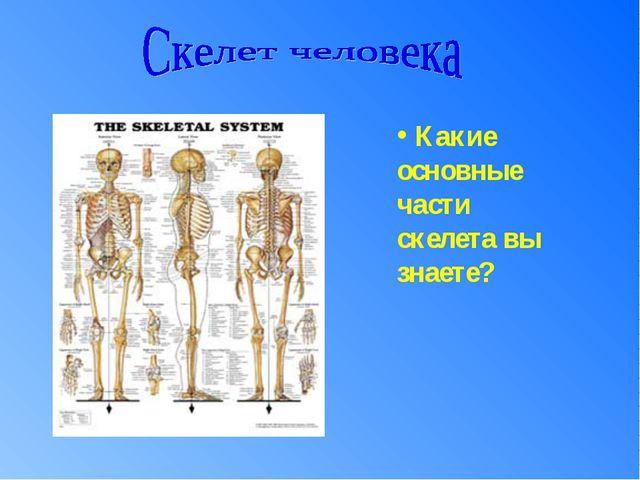 Какие основные части скелета вы знаете?