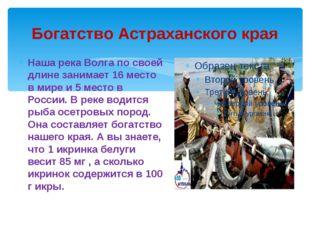 Богатство Астраханского края Наша река Волга по своей длине занимает 16 место