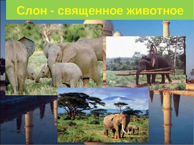 Слон - священное животное