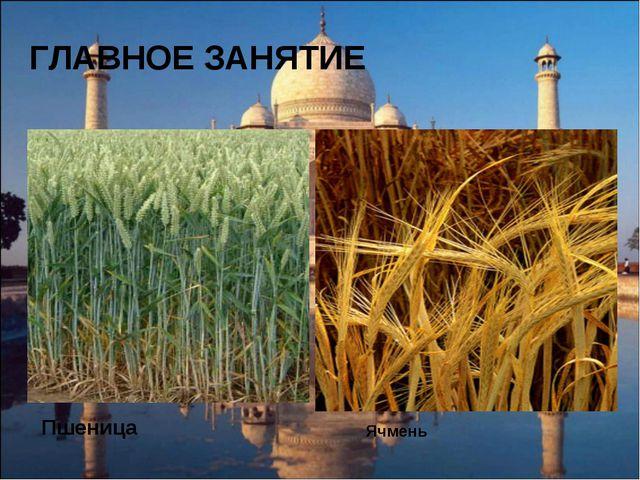 ГЛАВНОЕ ЗАНЯТИЕ Пшеница Ячмень