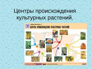 Центры происхождения культурных растений.