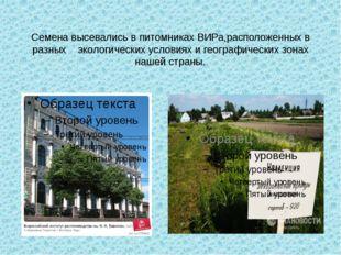 Семена высевались в питомниках ВИРа,расположенных в разных экологических усло