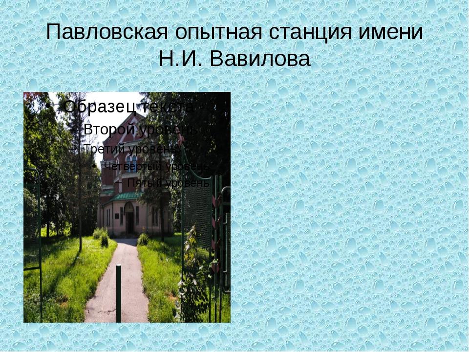 Павловская опытная станция имени Н.И. Вавилова