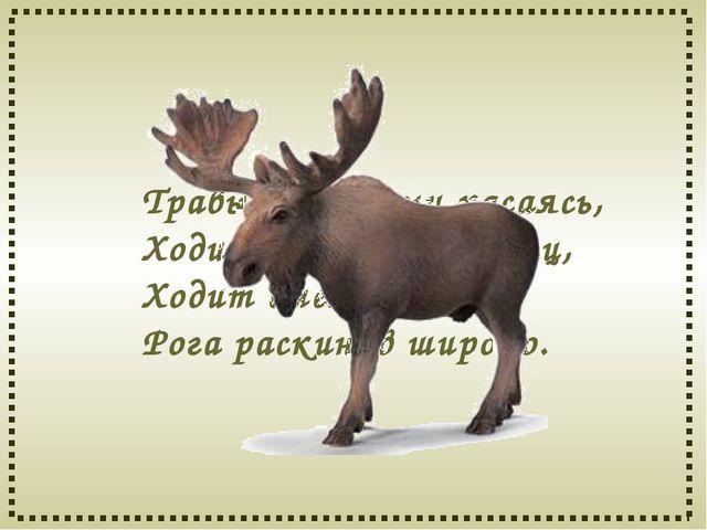Травы копытами касаясь, Ходит по лесу красавец, Ходит смело и легко, Рога рас...
