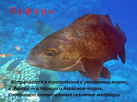 hello_html_35e0139e.png