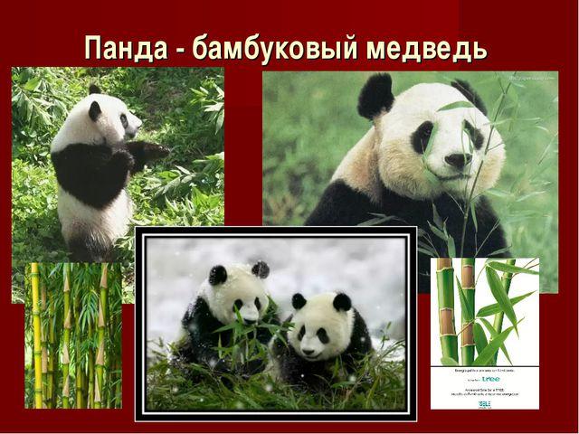 Панда - бамбуковый медведь