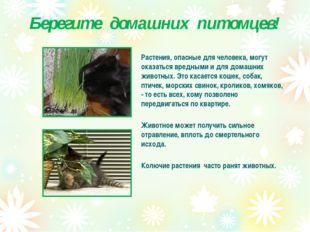 Берегите домашних питомцев! Растения, опасные для человека, могут оказаться в