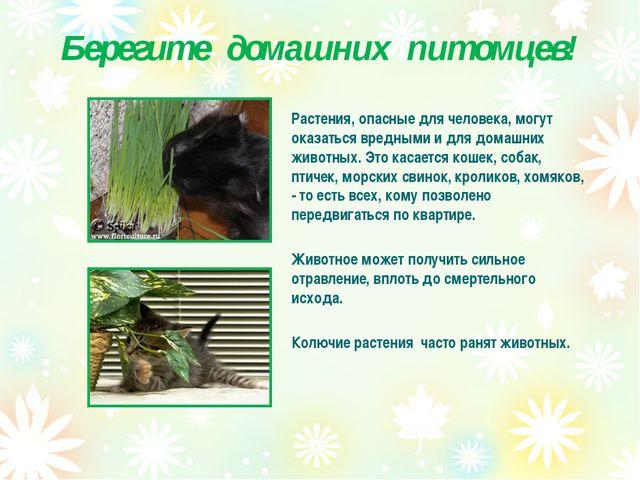 Берегите домашних питомцев! Растения, опасные для человека, могут оказаться в...